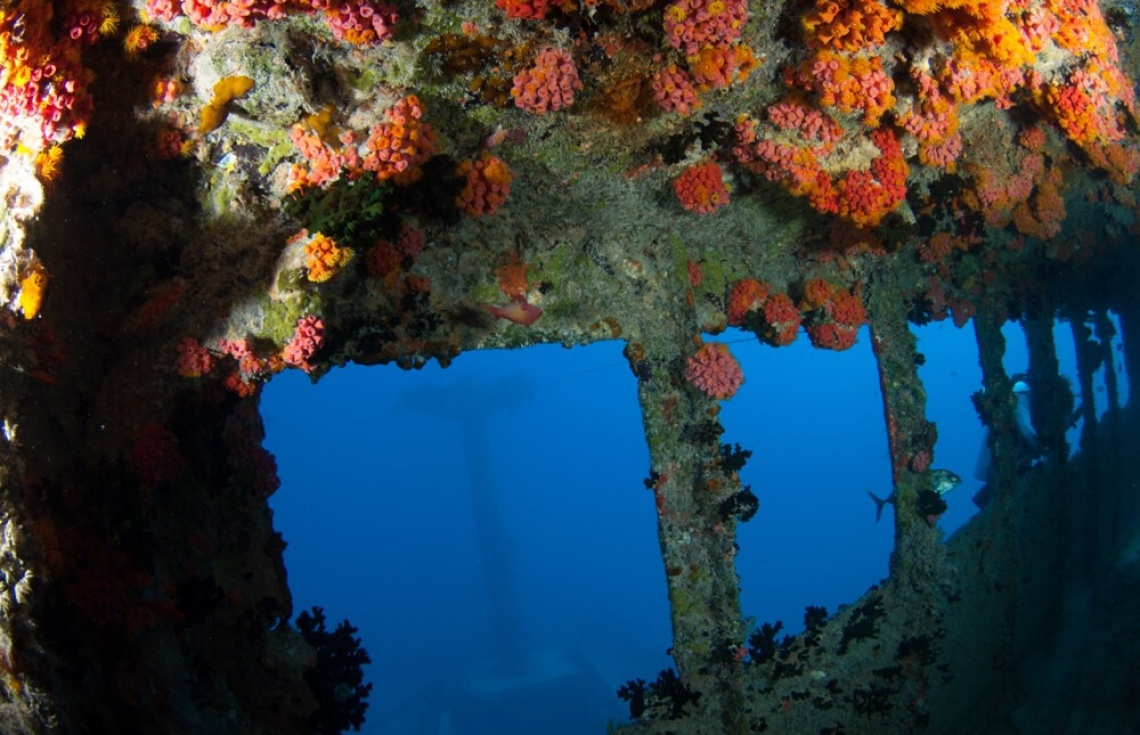 Diving for Shipwrecks: Maldives Victory Image